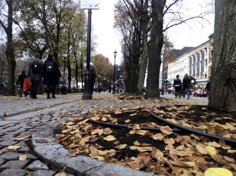BART: Det blir ikke vinter i Oslo ennå. Her på Karl Johan oser det fremdeles av høst.