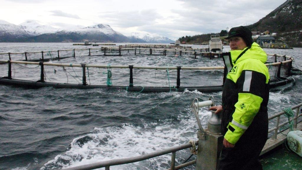 KLAGER PÅ KONSESJONSSYSTEMET: Ledelsen i Marine Harvest misliker sterkt dagens system for konsesjonstildeling av lakseoppdrett. (Illustrasjonsfoto).