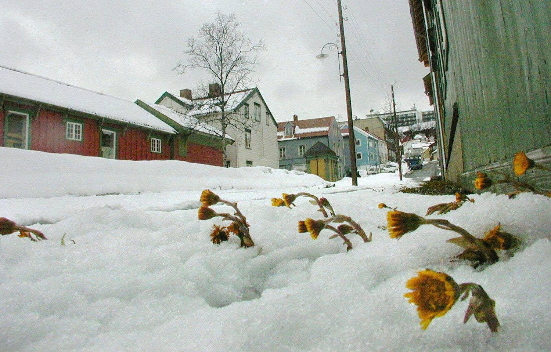 KAN LIGGE LITT: Det snør over store deler av landet søndag formiddag. Ifølge meteorologisk institutt kan det flere centimeter i løpet av dagen, men liggende lenge blir den nok ikke. Illustrasjonsfoto: Scanpix