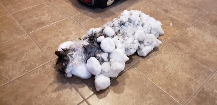 OVERLEVDE: Katten Fluffy overlevde med et nødskrik, etter å ha blitt funnet nedfrosset i snøen.