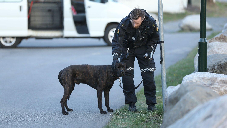 HUND BET FLERE: Politiet mottok melding om løs hund av større type som hadde bitt et barn. Parallelt med dette kom det også melding at en voksen person var bitt av samme hund. Her har politiet fått roet ned hunden og har kontroll på den.